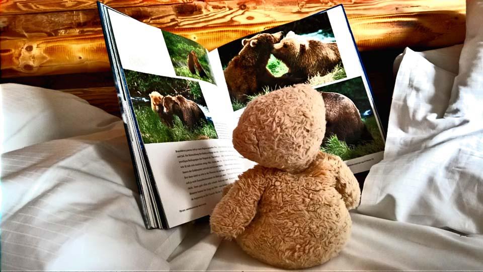Foster studiert seine Bären Verwandten. Ein Bilderbuch fasziniert