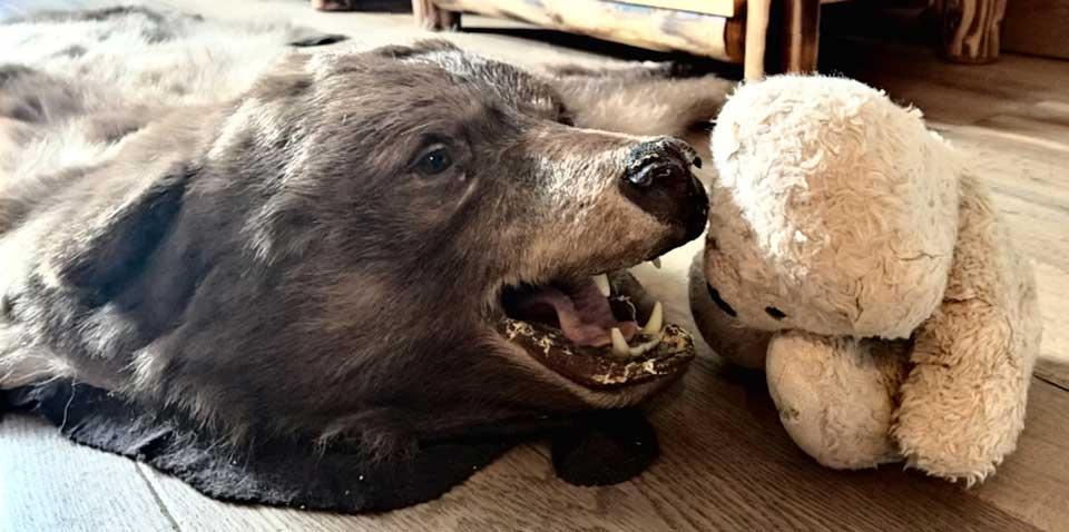Foster in der Bärensuite. Ein Artgenosse als Möbelstück