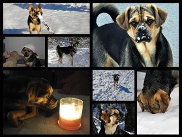 Collage von Puk rund um Weihnachten 2012 und Neujahr 2013