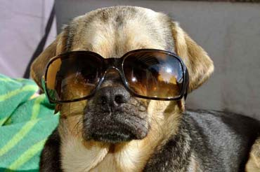 Puk McCool mit Sonnenbrille (8/2014)