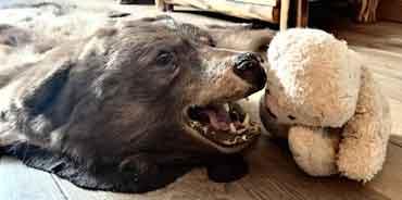 Ein Artgenosse als Möbelstück - Foster in der Bärensuite (von Benjamin Erhardt)