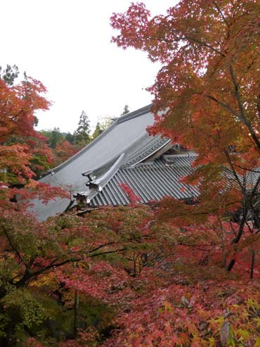 Rote Blätter im japanischen Herbst